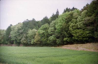 Scnfed20010_1