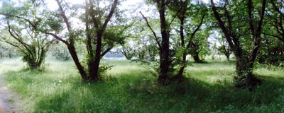 Scnhorizon0518_3